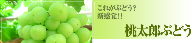 白桃,桃太郎ぶどう