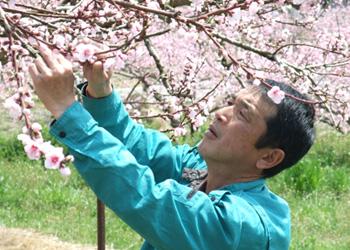 水蜜桃 三谷さん